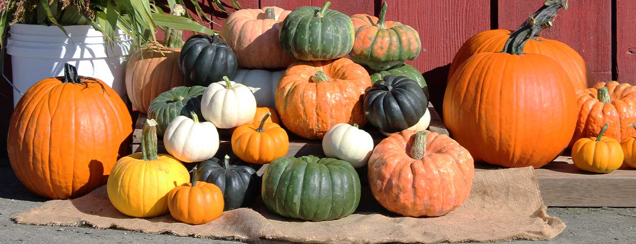 Pumpkin-Display-1300-x-500-DPI-96